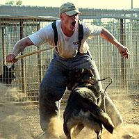 Kreative Kennels Team German Shepherd Puppies For Sale