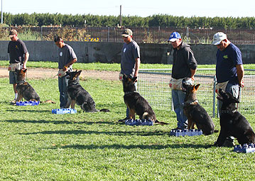 GERMAN SHEPHERD PUPPIES FOR SALE - PERSONAL PROTECTION DOGS